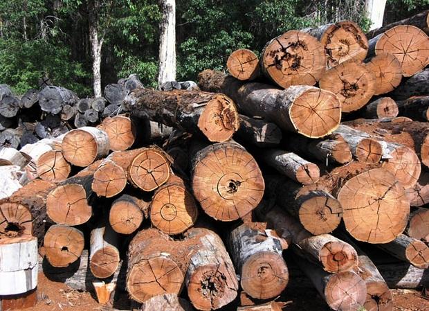 Timber